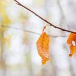 Красный Курган. Осень на берегу Оки. Осенний листок